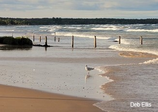 Image of Sauble Beach by Deb Ellis